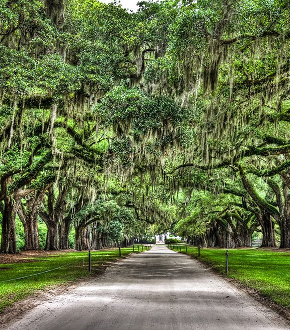 Boone Hall Plantation oak trees with spanish moss