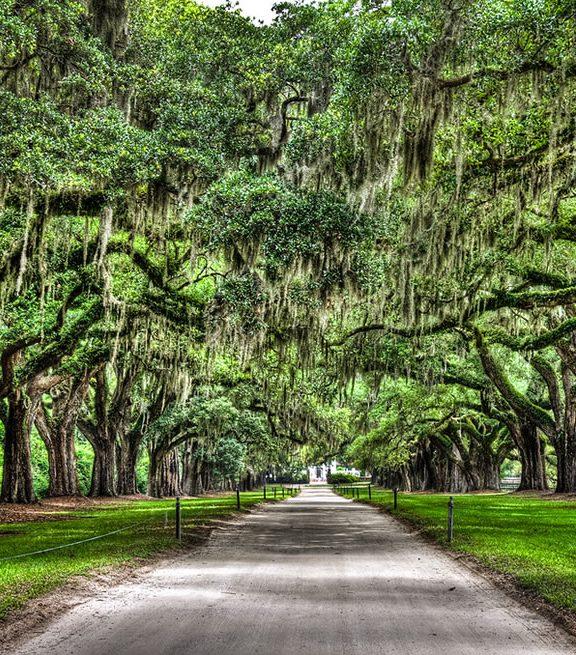 Boone Hall Plantation oak trees with spanish moss