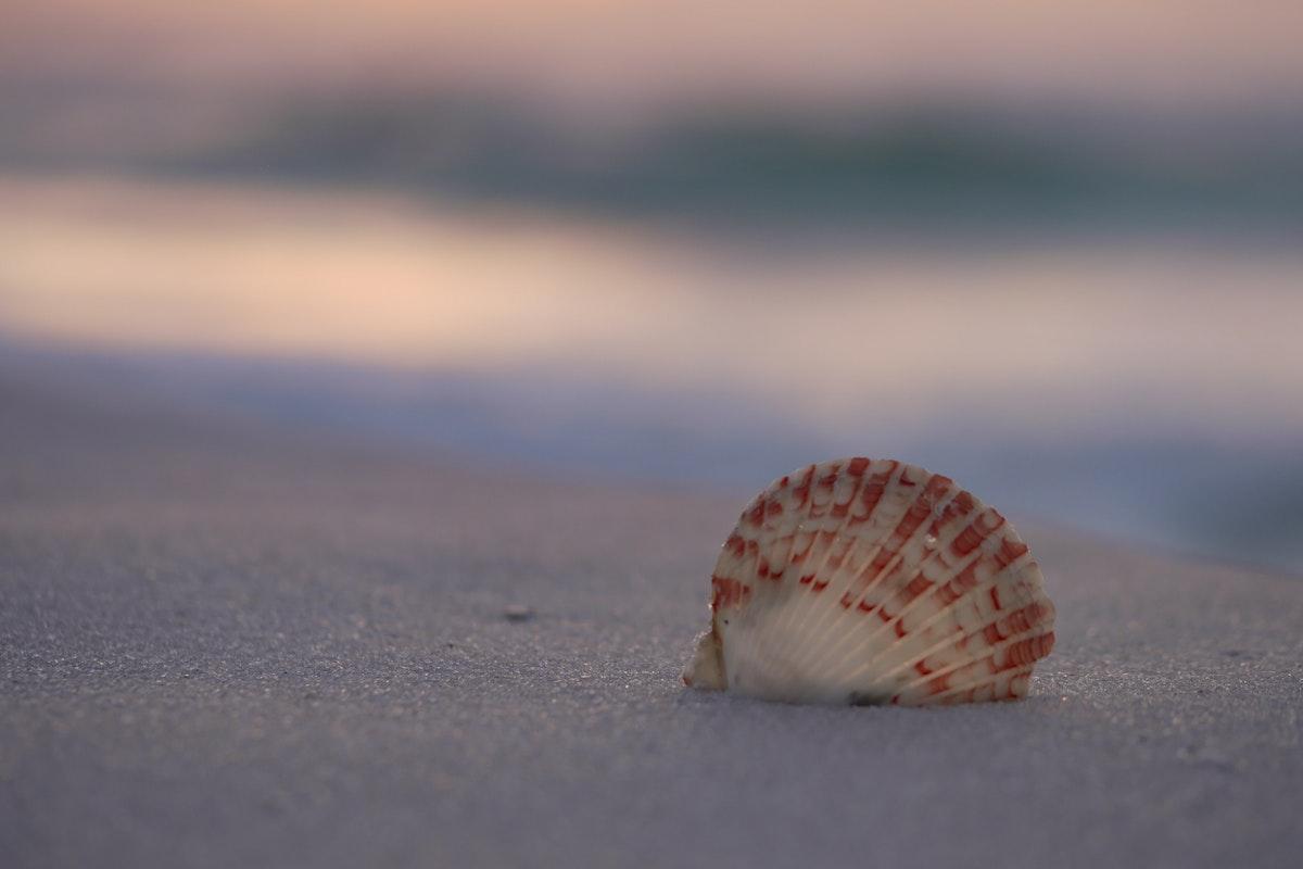 Shell in sand near the ocean
